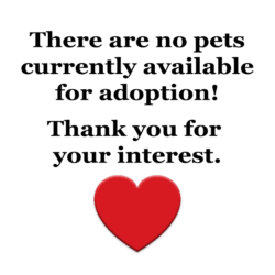 No available pets